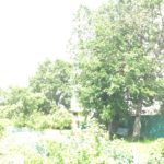 Место где стоял храм теперь частная территория, между деревьями, липой и тополем.